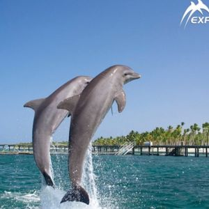 punta-cana-excursion-things-to-do-attraction-activities-tour-explorer3