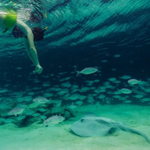 punta-cana-excursion-things-to-do-attraction-activities-tours-nation-seaquarium9