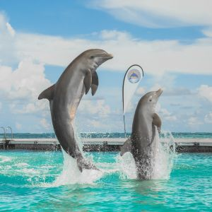 dominican-republic-punta-cana-things-to-do-must-do-excursions-tours-attractions-dolphin-island-dolphin-toursnation5