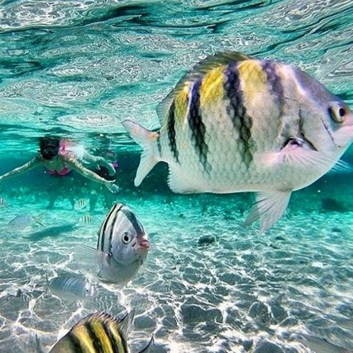 punta-cana-excursion-things-to-do-attraction-activities-Paradise-Island-VIP9
