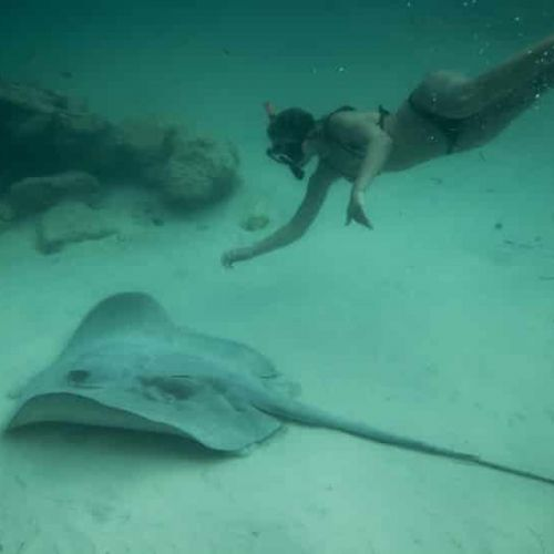 punta-cana-excursion-things-to-do-attraction-activities-tours-nation-seaquarium20