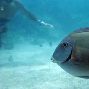 punta-cana-things-to-do---sailing-splash---snorkeling---tours-nation---toursnation---punta-cana5