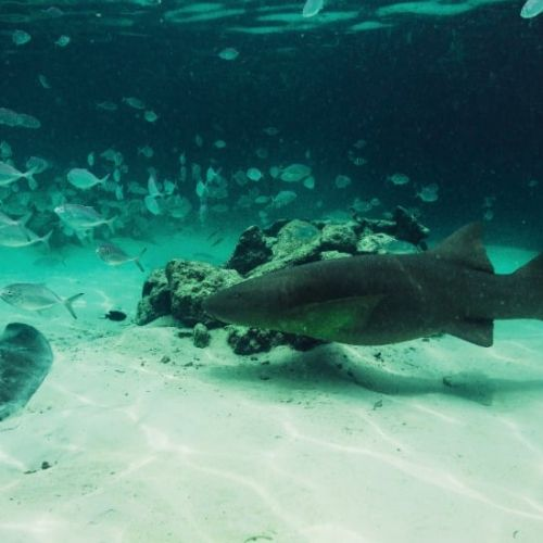 punta-cana-excursion-things-to-do-attraction-activities-tours-nation-seaquarium13