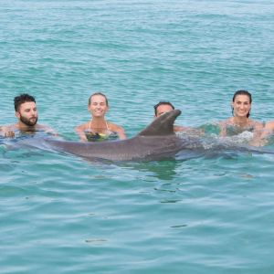 PUNTA-CANA-THINGS-TO-DO---DOLPHIN-ISLAND---SWIM-WITH-DOLPHINS---DOLPHIN-ACTION---SNORKELING1