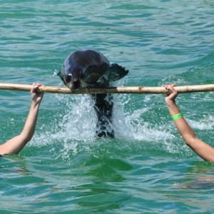 punta-cana-excursion-things-to-do-attraction-activities-tour-seals3