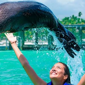 punta-cana-excursion-things-to-do-attraction-activities-tour-seals5