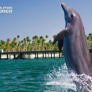 punta-cana-excursion-things-to-do-attraction-activities-tour-explorer1