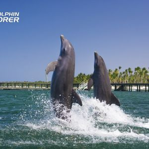 punta-cana-excursion-things-to-do-attraction-activities-tour-funtastic5