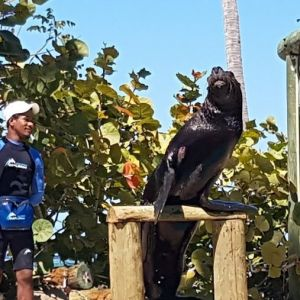 punta-cana-excursion-things-to-do-attraction-activities-tour-seals8