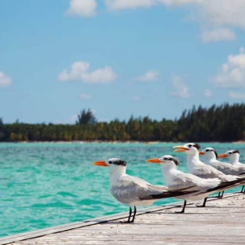 punta-cana-excursion-things-to-do-attraction-activities-tours-nation-seaquarium4
