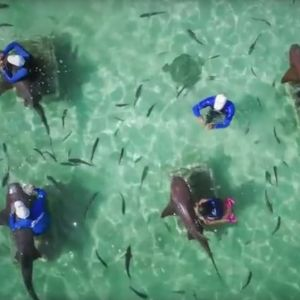 punta-cana-excursion-things-to-do-attraction-activities-tour-shark-rays7