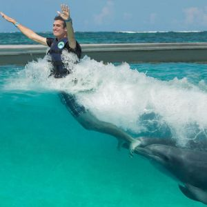 punta-cana-things-to-do---dolphin-island---swim-with-dolphins---dolphin-island---punta-cana3