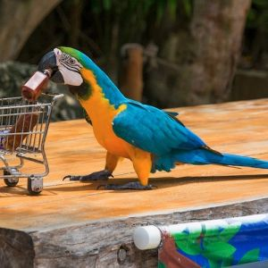 punta-cana-excursion-things-to-do-attraction-activities-tour-funtastic9
