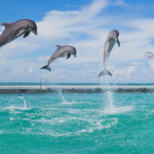 dominican-republic-punta-cana-things-to-do-must-do-excursions-tours-attractions-dolphin-island-dolphin-toursnation15