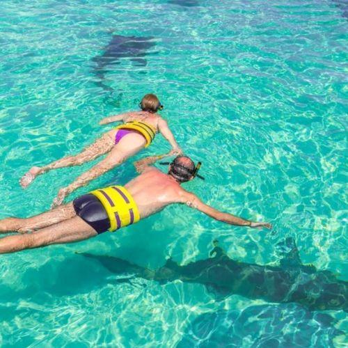 punta-cana-things-to-do---seaquarium---swim-with-shark---swim-with-rays---snorkeling---punta-cana7