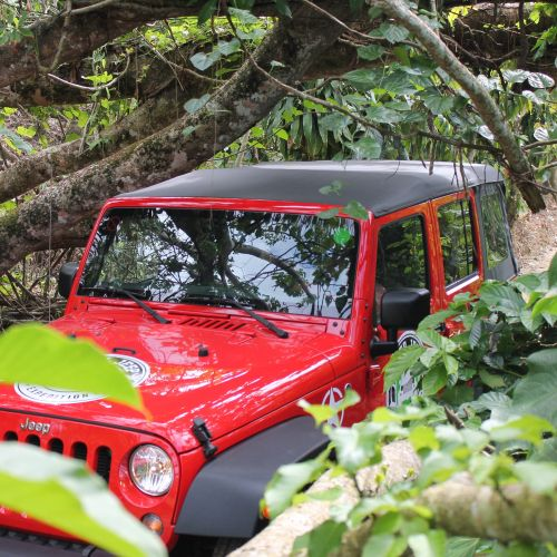 punta-cana-excursion-things-to-do-attraction-activities-super-jeep45