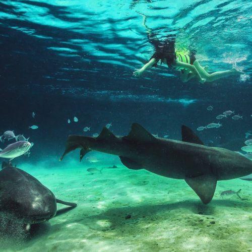 punta-cana-things-to-do---seaquarium---swim-with-shark---swim-with-rays---snorkeling---punta-cana4